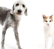 Pet Family Sticker
