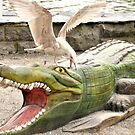Gull attacking crocodile by Stephen Frost