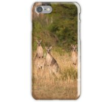 Trio of Posing Kangaroos iPhone Case/Skin