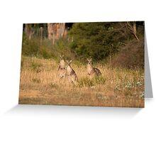 Trio of Posing Kangaroos Greeting Card