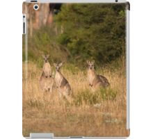 Trio of Posing Kangaroos iPad Case/Skin
