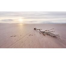 Pawprints And Driftwood Photographic Print