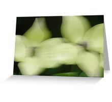 Dogwood ~ Blown by the Wind Greeting Card Greeting Card
