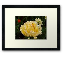 Spring Flower. Framed Print