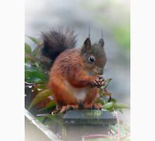 Red Squirrel in the Rain Argyll & Bute Unisex T-Shirt