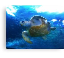 At the Two Oceans Aquarium. Cape Town. South Africa Canvas Print