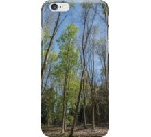 Trees reaching for the sky iPhone Case/Skin