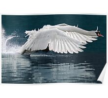 Ride a white swan Poster