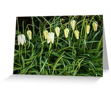A white flower bells Greeting Card