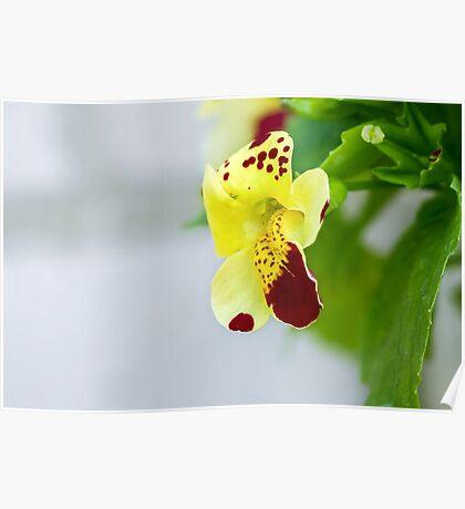Yellow flower macro Poster