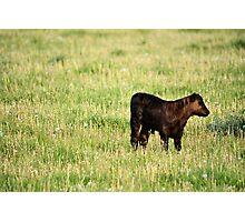 Babe In Dandelions Photographic Print