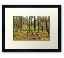 Trees in forest Framed Print