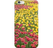 Rows of Tulips in Spring iPhone Case/Skin