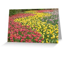 Rows of Tulips in Spring Greeting Card
