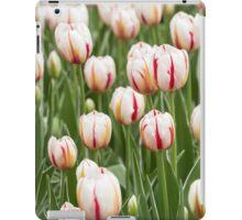 Tulips in spring time iPad Case/Skin