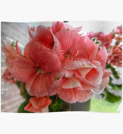 Pink Flowers HDR Poster