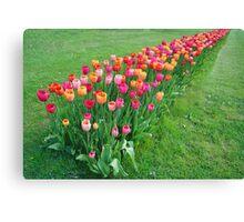 Tulips colours Canvas Print