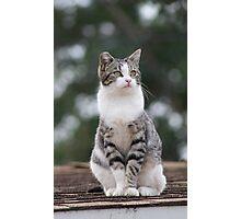 grey cat Photographic Print