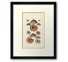 Thesaurus conchyliorum Monographs of genera of shells George Brettingham Sowerby 1887 V1-V5 360 Framed Print