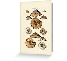 Thesaurus conchyliorum Monographs of genera of shells George Brettingham Sowerby 1887 V1-V5 360 Greeting Card