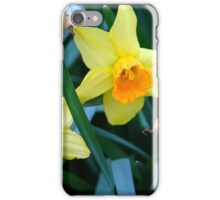 Fortune Daffodils iPhone Case/Skin