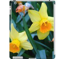Fortune Daffodils iPad Case/Skin