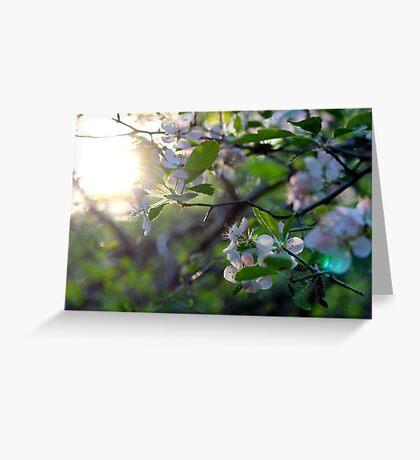 Sunlight Through Prairie Crabapple Blossoms Greeting Card