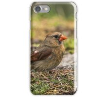Female Northern Cardinal iPhone Case/Skin
