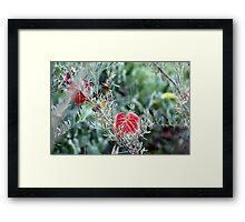 Wild Grape Framed Print