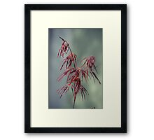 Chinese Maple Framed Print
