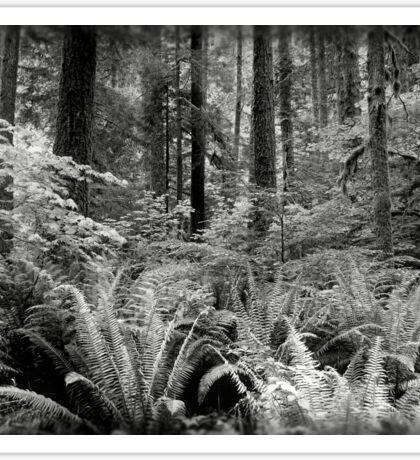 Ferns & Trees  Sticker