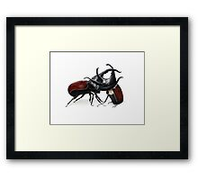 Survival of the Fittest - Hercules Beetle Collection Framed Print