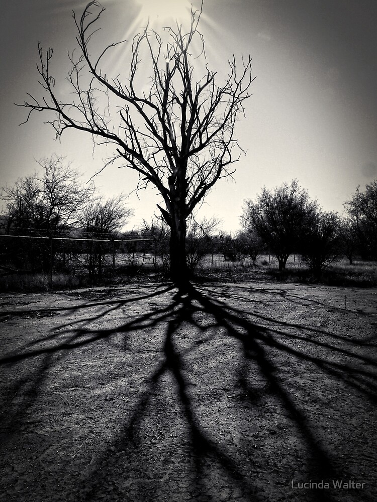 Tree in Winter by Lucinda Walter