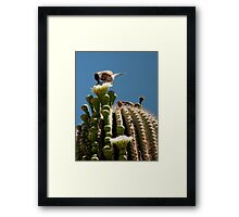 Time for a Treat Framed Print