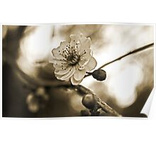 Cherry Blossoms in Sepia #2 Poster