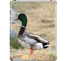 Mallard Duck iPad Case/Skin