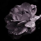Monochrone Rose #2 by Evita
