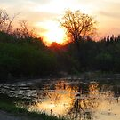 Sunset Over The Beaver Pond by MaeBelle