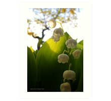 Convallaria Majalis - Lily Of The Valley Flower Filled With Sunrise | Melville, New York Art Print