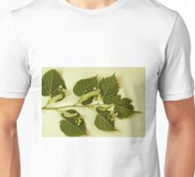 Basswood Leaves And Flowers Unisex T-Shirt