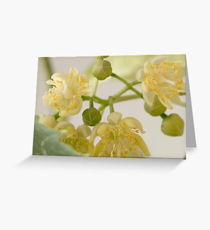 Basswood Tree Blossoms - Macro Greeting Card