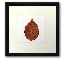 Nature vein Framed Print