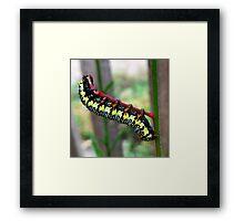 Caterpillar's Lunch - Macro Framed Print