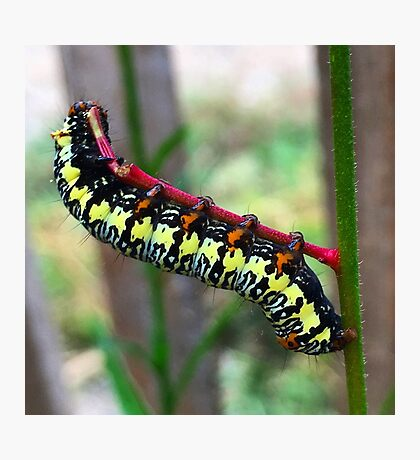 Caterpillar's Lunch - Macro Photographic Print