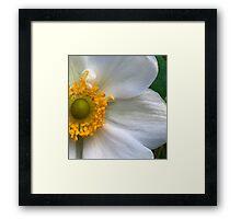 Blonde Anemone - Macro Framed Print