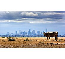 City Cow Photographic Print