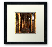 Treelined Sugar Gums - Macro Framed Print