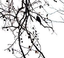 solitary twitter by Karen E Camilleri
