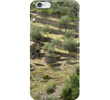 Olivenhain, Ligurien iPhone Case/Skin