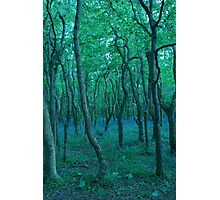 Bluebells in Tehidy Woods, Cornwall Photographic Print